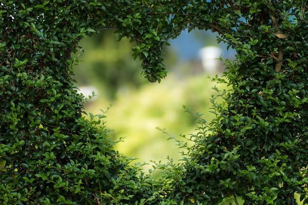 Czym charakteryzuje się ekologiczny ogród?