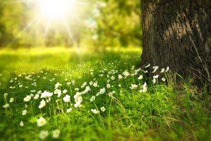 Dlaczego warto stosować środki ochrony roślin w ogrodnictwie?